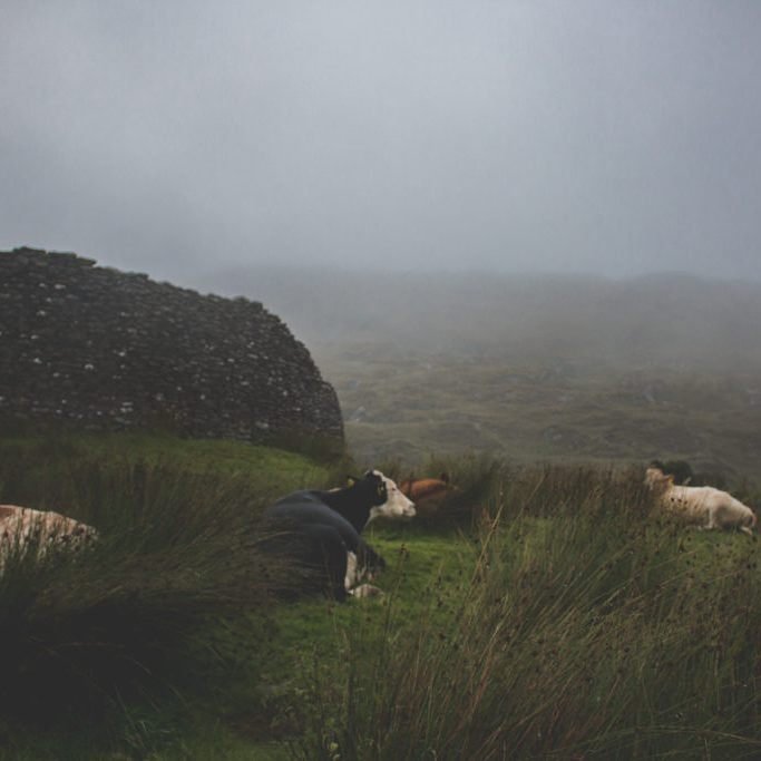 This mist in Ireland was beautiful More up on blog!